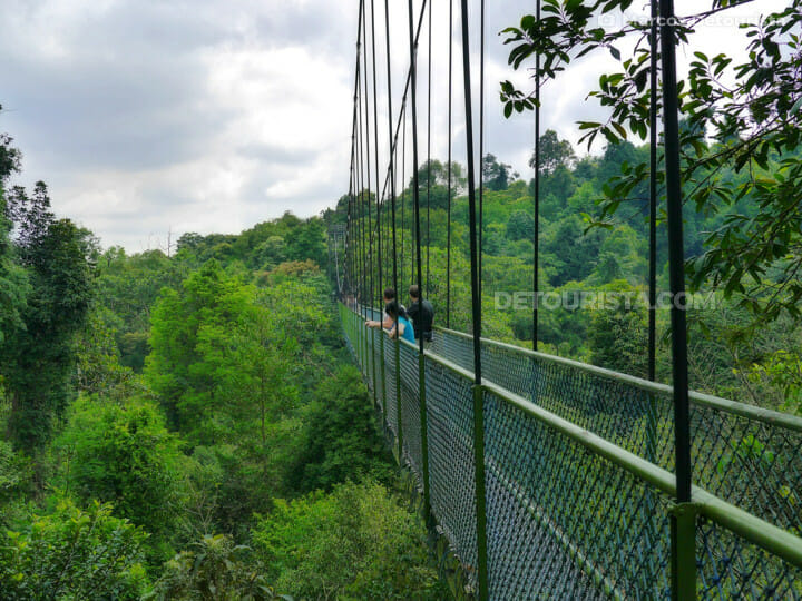 TreeTop Walk at MacRitchie Nature Trail, in Singapore. Photo by <a href=