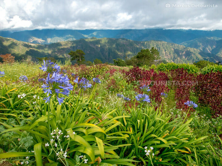 Atok flower farms, Benguet