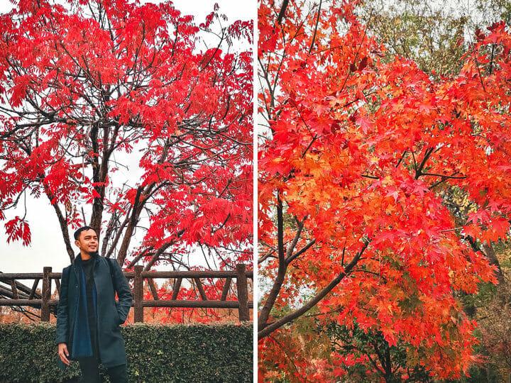 Autumn Season in Osaka Castle, Japan