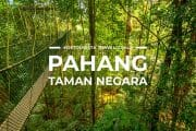 6 Places To Visit in Pahang Taman Negara